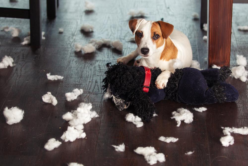 Pes roztrhá hračku