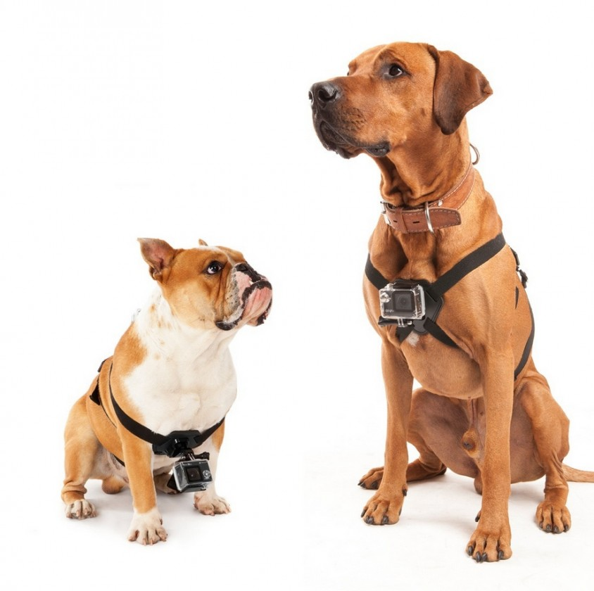 Příslušenství k outdoor kamerám MadMan Postroj na psa pro GoPro