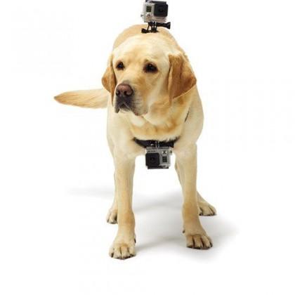 Příslušenství k outdoor kamerám Popruh NICEBOY pro upevnění na psa